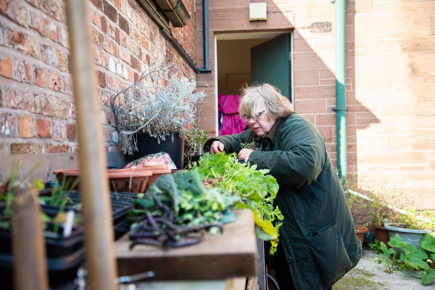 Older person looking through plants and vegetables